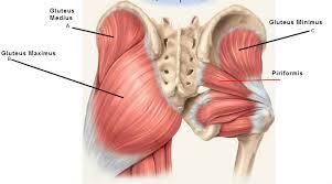 ilium pain - ilium bone and muscles