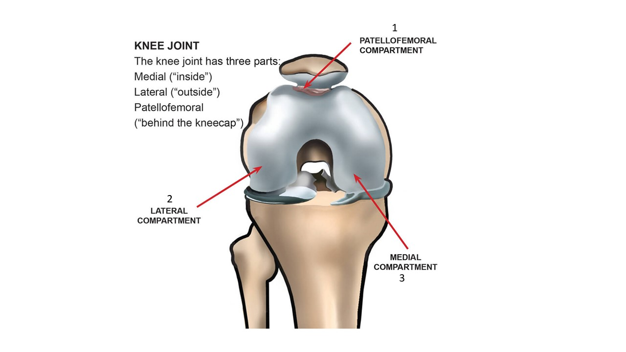 Knee compartments