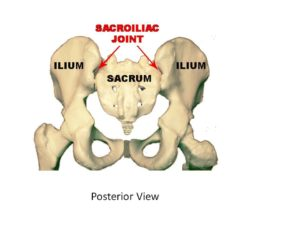 image showing where the Sacroiliac Joints are located - between the ilium and sacrum