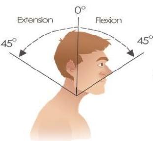 cervical flexion vs extension