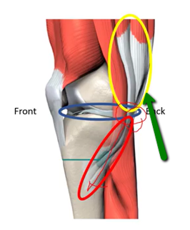knee pain self-exam