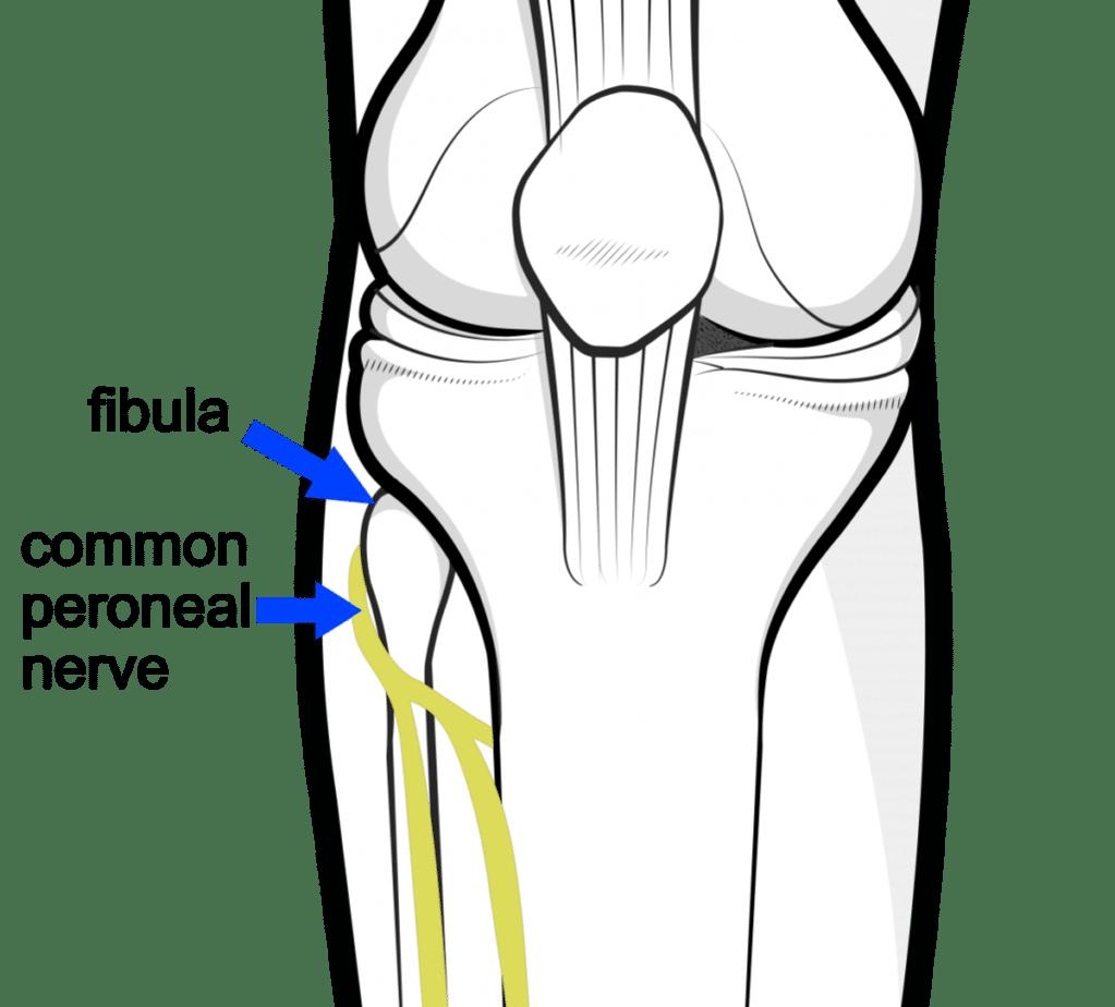 peroneal nerve fib head