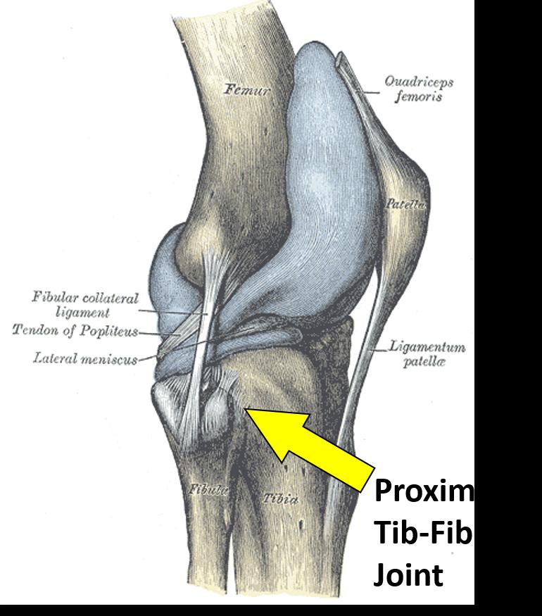 proximal tib fib joint